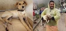 Cão chora ao procurar por corpo do dono soterrado em deslizamento em Guarujá - SP