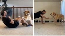 Personal dog: labrador motiva dono em treino e vídeo ganha milhões de visualizações