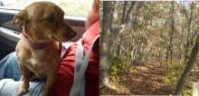 Caminhoneiro abandona cão na estrada e motorista que seguia atrás o adota