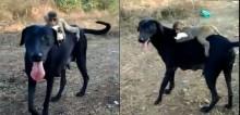 Bombou: Amizade improvável entre macaquinho e cadela encanta e prova que não há diferenças para o afeto