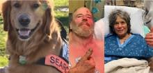 Após 8 dias de busca por idosos desaparecidos na floresta, polícia escala cão golden retriever que os encontra