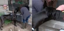 Coronavírus: Cachorro terapeuta visita janelas de idosos adoecidos para fazê-los sorrir