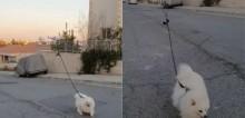 Quarentena: para não sair de casa, homem usa drone para guiar seu cão em passeio (veja o vídeo)