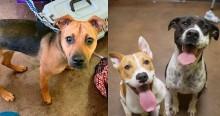Homem tenta doar 30 cães a abrigo com medo de não conseguir sustentá-los em meio a surto de coronavírus