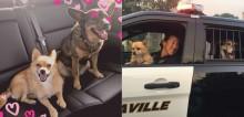 Abrigo de cães pega fogo e policial feminina salva 67 animais em ato heroico