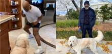 Em quarentena, Mike Tyson treina boxe com seu cachorro que se mostra nada empolgado (veja o vídeo)