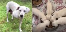 Cachorra desesperada chama atenção para socorristas salvarem sua ninhada