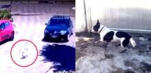 Homem abandona cachorro, se arrepende 2 horas depois e volta para resgatá-lo em SP
