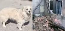 Cão vira-lata leal arranha porta para acordar seus donos e salvá-os de incêndio