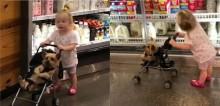 Em vídeo viral fofinho, cão yorkshire adora fazer compras com sua pequena dona em supermercado