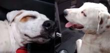 Homem vai à farmácia, encontra cachorro de rua dormindo em seu carro e acaba o adotando (veja o vídeo)