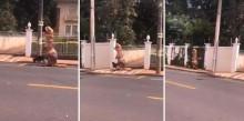 Em SP, homem dribla quarentena se vestindo de dinossauro para passear com seu cão; veja o vídeo