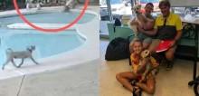 Cachorro pensa rápido e resgata irmãzinha canina que caiu em piscina; veja o vídeo