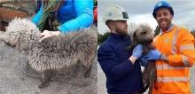 Cachorra fica presa em esgoto por 24h ao tentar perseguir rato e precisou de engenheiros para salvá-la