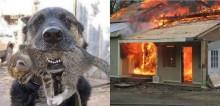 Cachorro arrisca sua vida para salvar gatinho após grande explosão em empresa