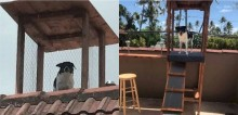 Fofoqueiro de plantão: Donos constroem 'torre de vigilância' para cão monitorar vizinhança na quarentena