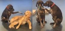 Cachorro carente viraliza na web com hábito de fazer carinho nos colegas de creche (veja o vídeo)