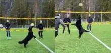 Cachorro incrivelmente habilidoso joga vôlei e impressiona a internet em vídeo viral