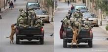 Cães vira-latas seguem carro de militares e são acolhidos e adotados por eles