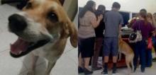 Desaparecido, cachorro percorre 8 km e comparece em funeral da sua dona