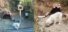 Cachorro vira-lata se recusa a deixar local em que dono faleceu há 3 anos (veja o vídeo)