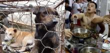 Consumo de carne de cães e gatos na China: lei de proibição entra em vigor em maio em cidade chinesa