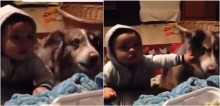 Oferecendo lanche, mulher incentiva bebê a falar 'mamãe' e cachorro é quem responde