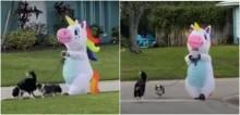 Coronavírus: Mulher se veste de unicórnio para passear com os cães nos EUA e vídeo bomba na internet