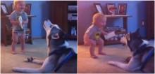 Pais gravam bebê e cachorro husky siberiano conversando em brincadeira e vídeo faz sucesso