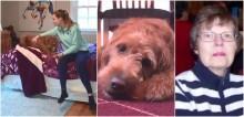 Cachorro alerta dona que a sua avó estava caída inconsciente em outro cômodo da casa