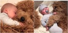 Vídeo de bebê dormindo agarrado em cachorro da raça goldendoodle fazem o maior sucesso na web