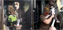 Após perder a sua dona, cachorro pit bull entra em carro de motorista que o visitava e se recusa a sair
