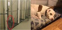 De rejeitado a adotado: único cachorro que não foi adotado em abrigo sorri ao ganhar novo lar