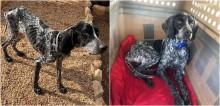 Mulher salva 50 cães em situação de rua em meio à pandemia de Covid-19