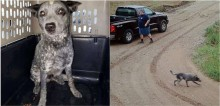 Após ter sido jogado de carro pelo dono,  cachorro fica esperando homem voltar por 9 horas