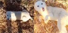 Cão vira-lata abandonado em estrada deserta segue atleta que corria por ali e implora para ser adotado