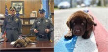 Cachorro policial K9 dorme durante cerimônia de juramento à corporação
