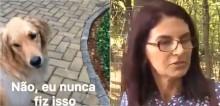 Cadela golden retriever recria meme 'Senhora, senhora' em vídeo hilário; assista