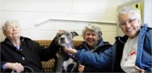 Após perderem o seu mascote, freiras adotam cachorro pit bull que sempre era rejeitado em abrigo