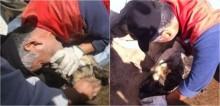Bombeiro faz respiração boca a boca para salvar pastor alemão com parada cardíaca e o salva