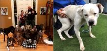 Casal acolhe cachorros idosos que ninguém quer adotar, para dar conforto e uma vida digna a eles