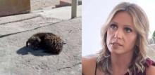 Em relato emocionante, Luisa Mell expõe resgate de um cão cego que vivia nas ruas e estava há dias sem comer