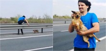 Médico veterinário para carro em rodovia movimentada para salvar cadela abandonada -assista