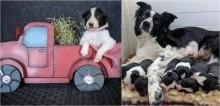 Caminhoneiros levam filhotes de cachorros a outras cidades para que eles sejam adotados durante quarentena