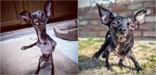Cãozinho com deficiência é encontrado abandonado embaixo de carro, é salvo ganha amor que tanto merece