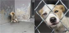 Cachorrinho deprimido recebe 2ª chance de ser feliz ao ser adotado após anos vivendo nas ruas