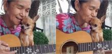 Idosa de 69 anos e chihuahua viram sensação na internet com covers de músicas famosas (veja o vídeo)