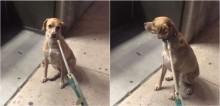 Cão labrador para em frente de seu pet shop favorito que está fechado e se recusa a sair dali