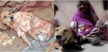 Mulher sem-teto acolhe cachorro paraplégico e o entrega para ONG para receber fisioterapia