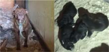 Cadela se mostra agressiva com a aproximação de socorristas que percebem que ela estava tentando proteger os seus filhotes